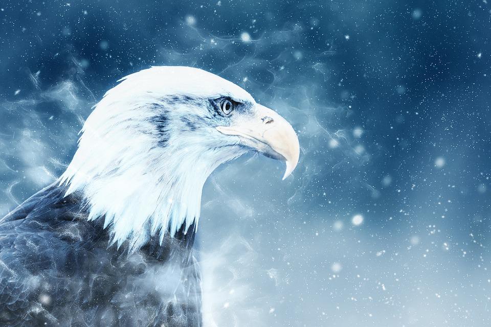 Cute Baby Horse Wallpaper Adler Vogel Schnee 183 Kostenloses Bild Auf Pixabay