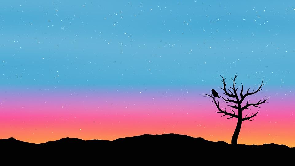 Dark Girl Wallpaper Sky Tree Sunrise 183 Free Image On Pixabay