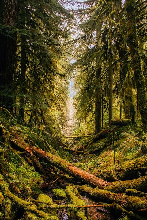 Free Fall Nature Wallpaper Oregon Landscape Forest 183 Free Photo On Pixabay