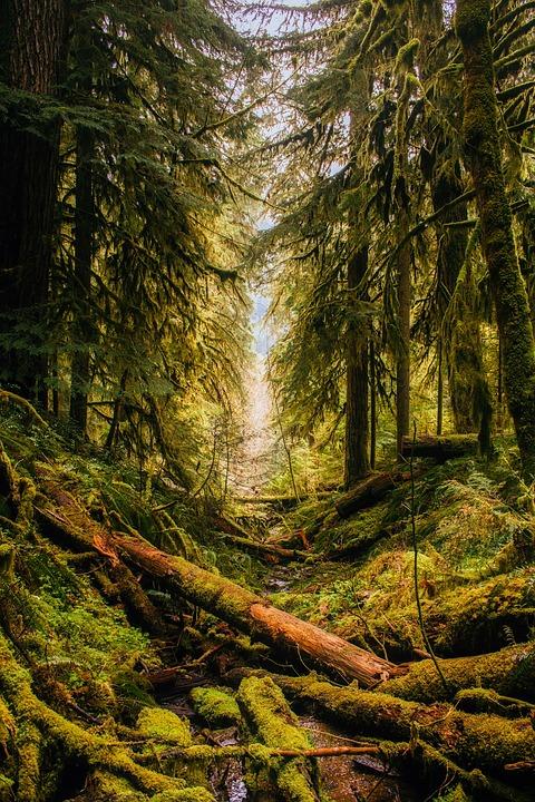 Fall River Wallpaper Oregon Landscape Forest 183 Free Photo On Pixabay