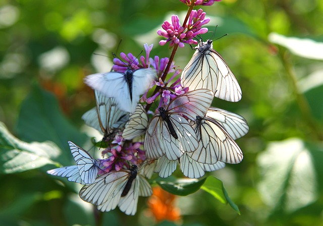 Animal Love Wallpaper Instinct Butterfly 183 Free Photo On Pixabay
