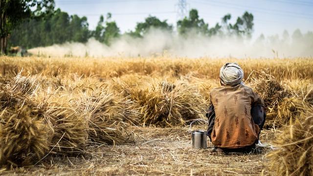 Guru Nanak Dev Ji Hd Wallpaper Farmer Wheat Crop 183 Free Photo On Pixabay