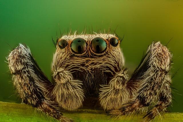Cute Rose Wallpaper Spider Macro Jumper 183 Free Photo On Pixabay
