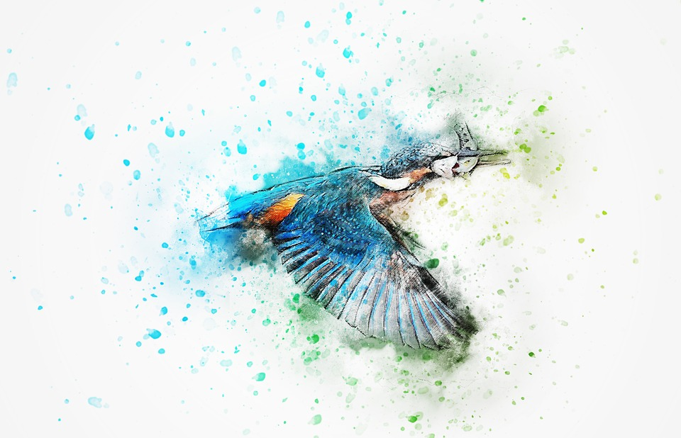 Abstract Animal Wallpaper Bird Kingfisher Color 183 Free Image On Pixabay