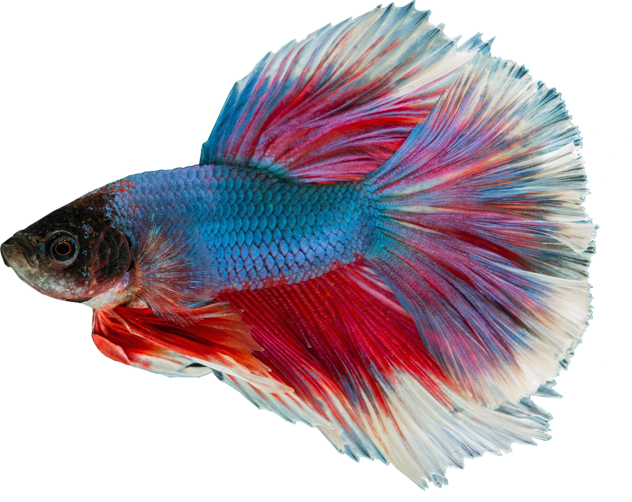 Fish Wallpaper Hd ภาพฟรี แยก ภาพฟรีที่ Pixabay 2377232