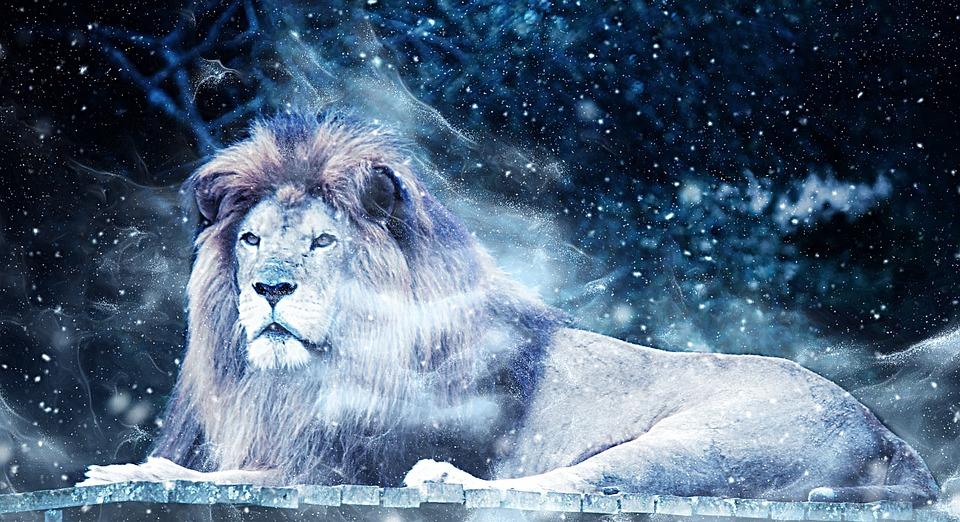 Cute Animal Wallpapers Free Lion Snow Art 183 Free Image On Pixabay