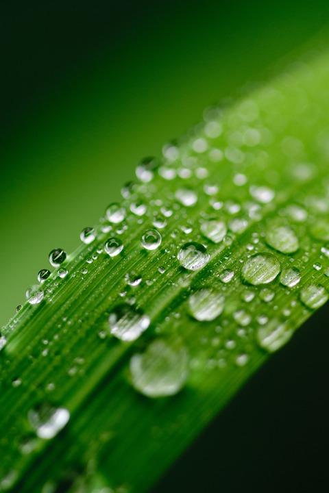 3d Water Drop Wallpapers Desktop Kostenloses Foto Gr 252 N Wasser Blatt Tau Natur