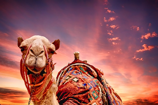 Car In Desert Hd Wallpaper Camel Sunset Landscape 183 Free Photo On Pixabay