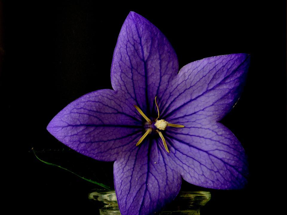 Flower Plant Blue · Free photo on Pixabay