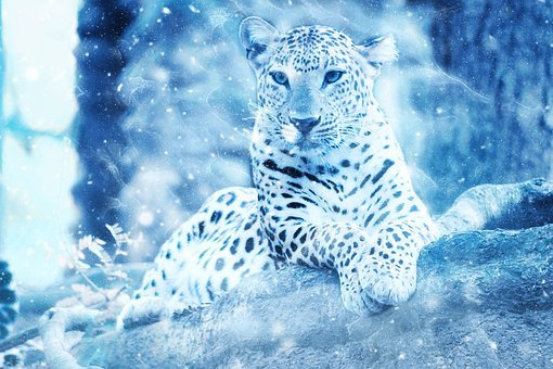 Cute Cat Wallpaper 3d Snow Leopard Free Pictures On Pixabay