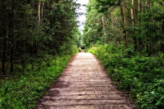 Jesus Hd Live Wallpaper Free Download Away Forest Path 183 Free Photo On Pixabay