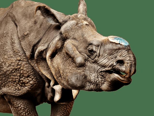 Animal Wallpaper Images Rhino Animal World 183 Free Photo On Pixabay