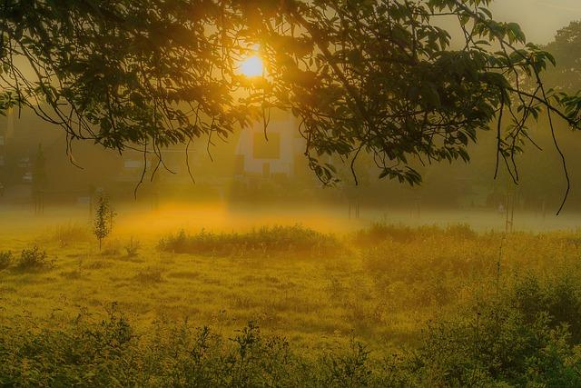 Village Girl Photo Wallpaper Sunrise Fog Tree 183 Free Photo On Pixabay