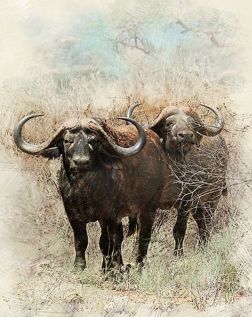 Black And White Animal Wallpaper African Buffalo Africa 183 Free Photo On Pixabay