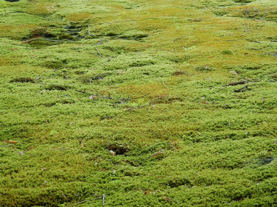 Moss Carpet Carpet Vidalondon