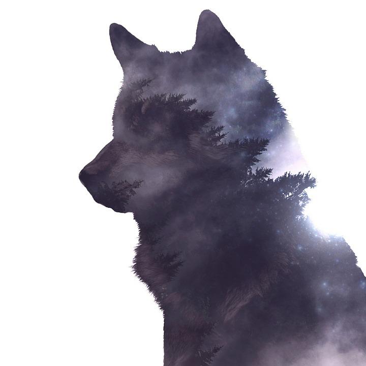 Black Background Wallpaper 늑대 자연 포토샵 183 Pixabay의 무료 이미지