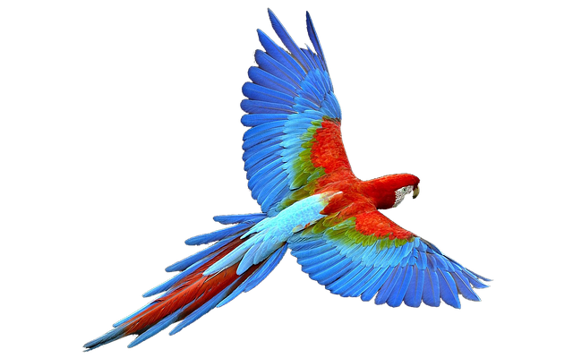 Anime Cat Girl Wallpaper Hd Parrot Isolated Flight Colorful 183 Free Photo On Pixabay