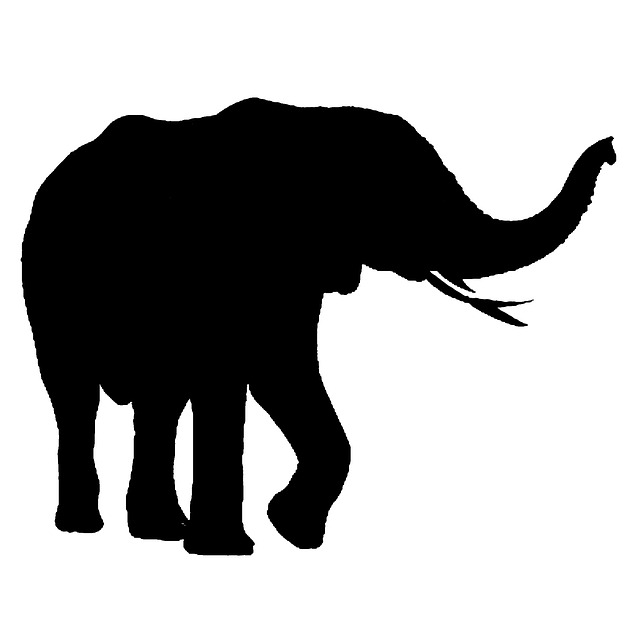 Girl Wallpaper Black And White African Elephant Isolated 183 Free Image On Pixabay