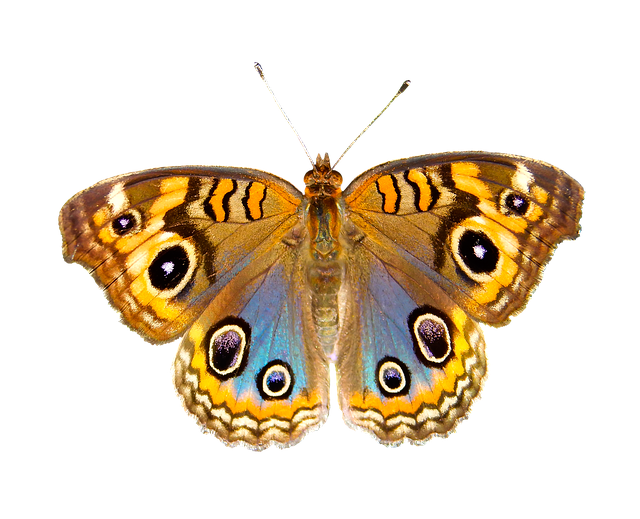 Download Gambar Wallpaper 3d Nature Animals Butterfly 183 Free Photo On Pixabay
