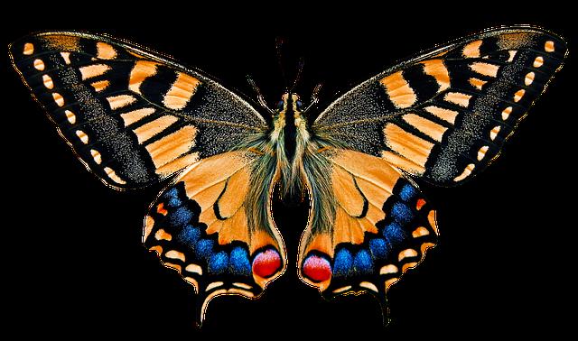 Safari Animal Wallpaper Nature Animals Butterfly 183 Free Photo On Pixabay