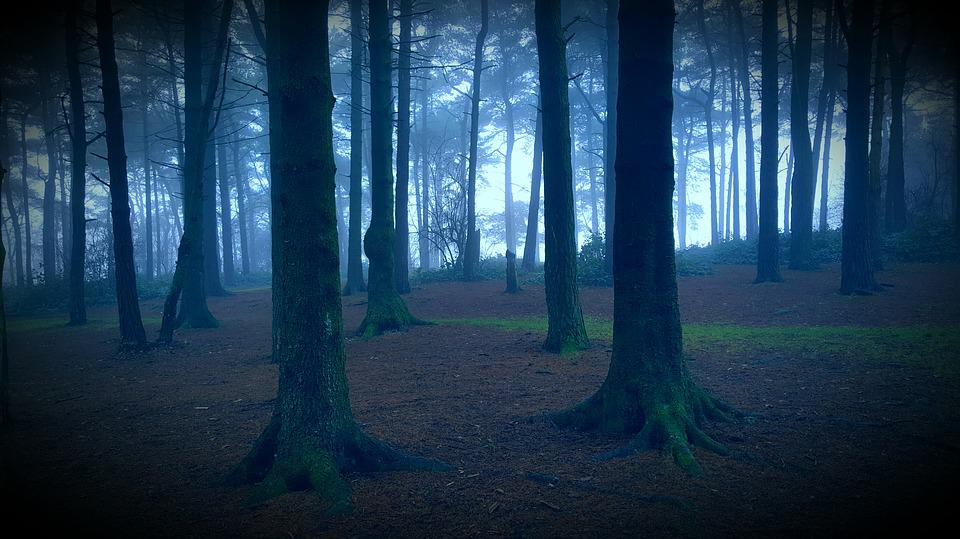 Free Fall Flowers Wallpaper Spooky Forest 183 Free Photo On Pixabay