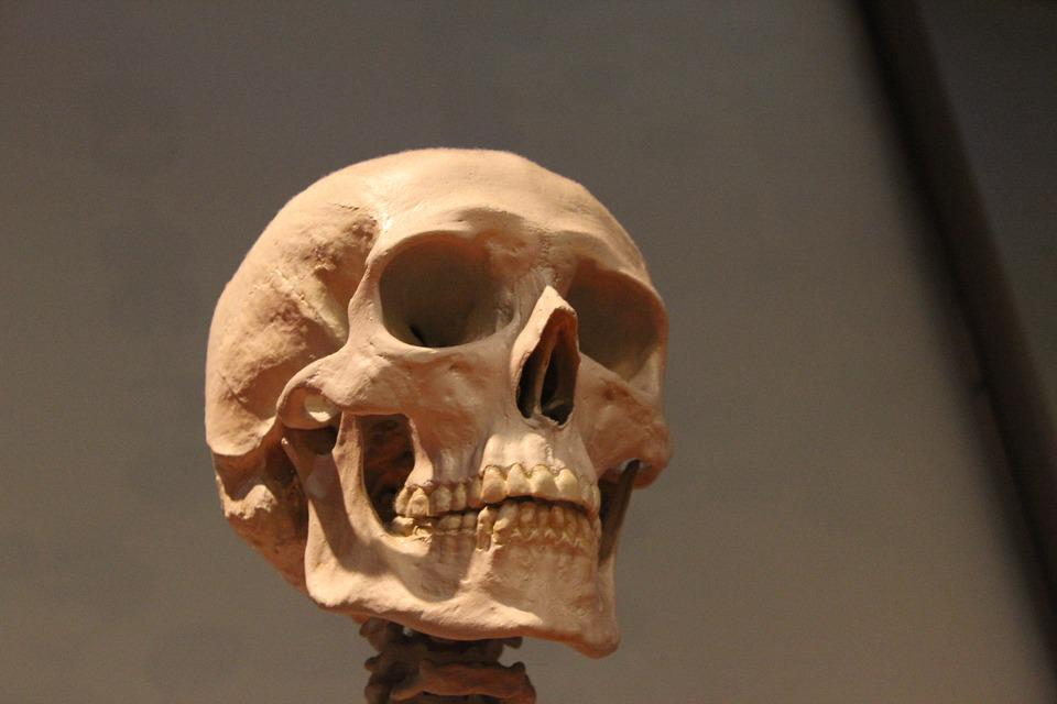 Wallpaper Hd Skeleton Skull Skeleton Head 183 Free Photo On Pixabay