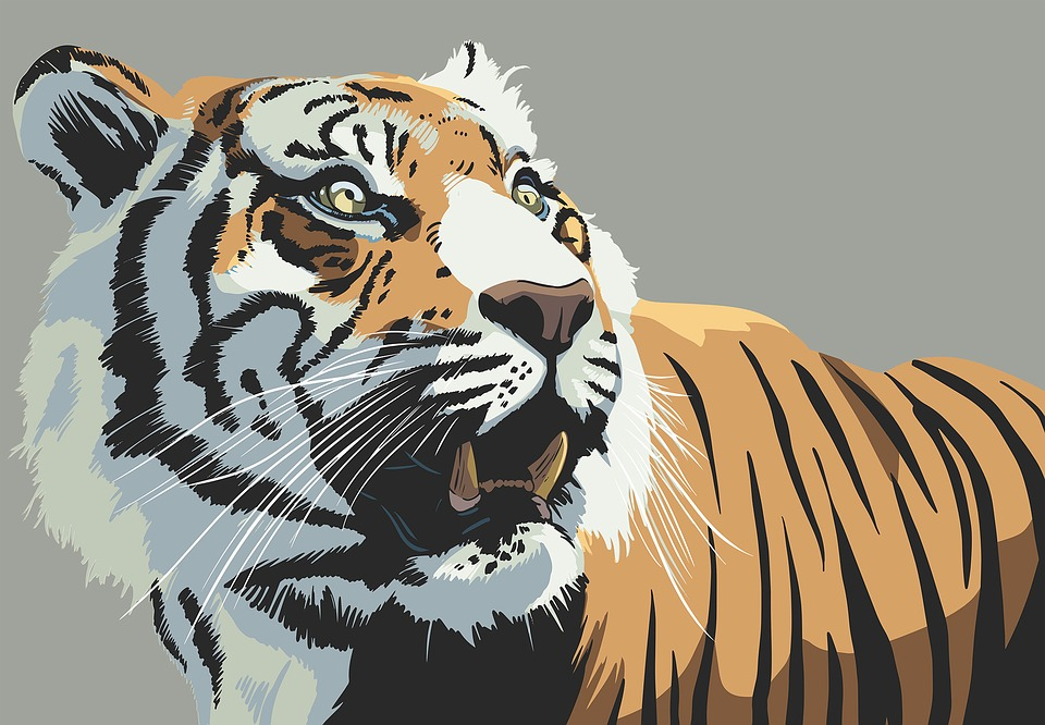Cute Puppy Pics Wallpaper Tiger Animal Stare 183 Free Image On Pixabay