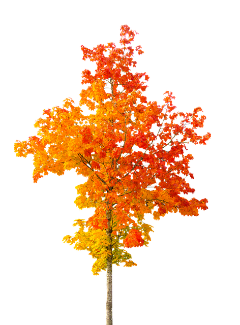 Vector Wallpaper Fall Colors Nature Autumn Tree Fall 183 Free Photo On Pixabay