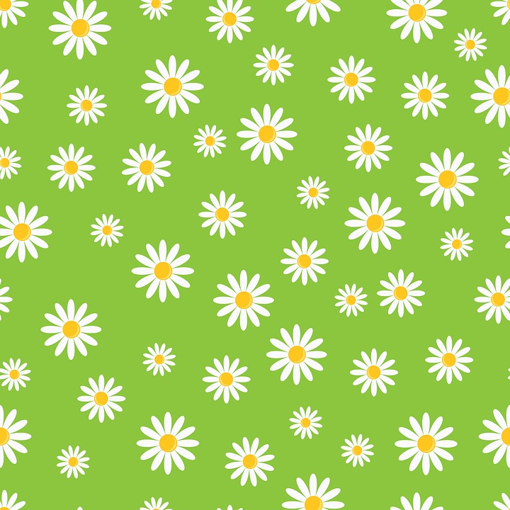 White Flower Wallpaper 3d Daisy Flowers Floral 183 Free Image On Pixabay
