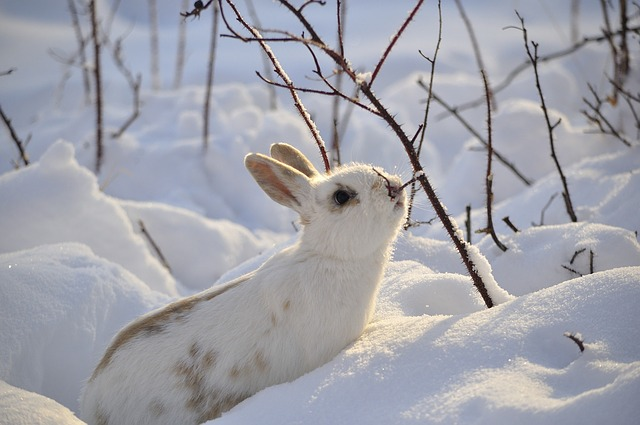 Animated Winter Wallpaper Rabbit Wild Animal 183 Free Photo On Pixabay