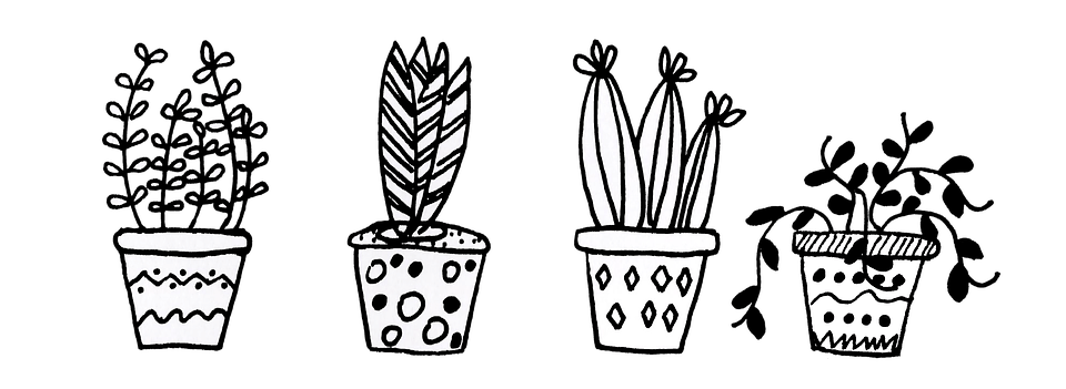 Black And White Flower Wallpaper Plants Flowerpot Cacti 183 Free Image On Pixabay