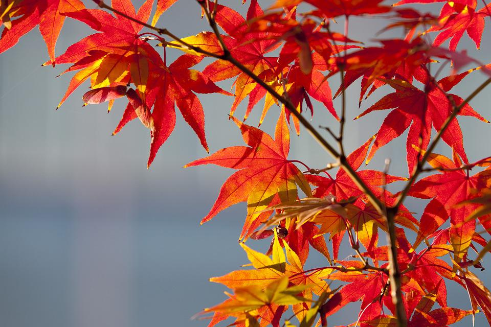 Fall October Wallpaper Maple Leaf Autumn Leaves 183 Free Photo On Pixabay