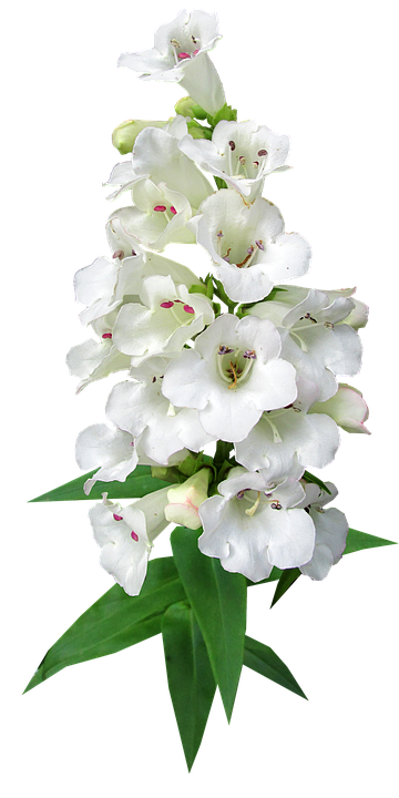 Black Beautiful Girl Wallpaper Flower Stem 183 Free Photo On Pixabay
