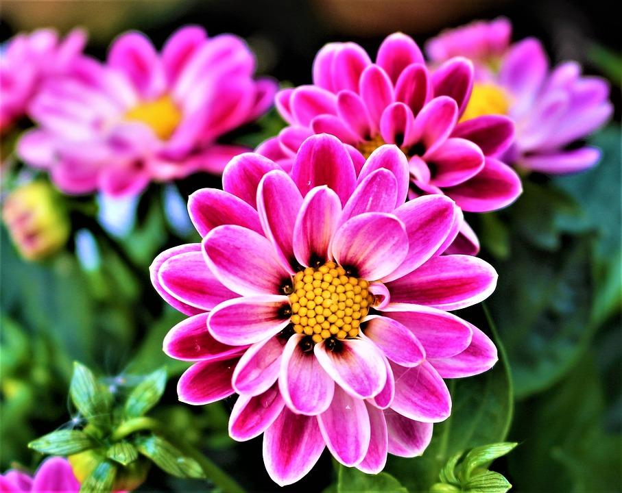 Hd Pot Wallpaper Free Photo Flowers Petal Flowering Plants Free Image