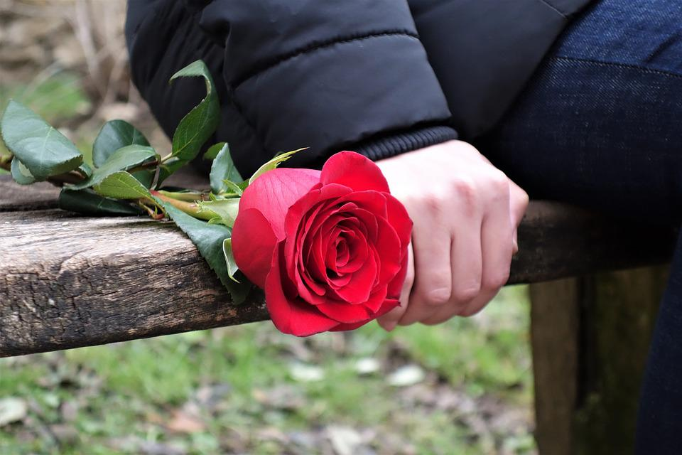 Girl Sitting On Bench Wallpaper Girl With Red Rose Love Waiting 183 Free Photo On Pixabay