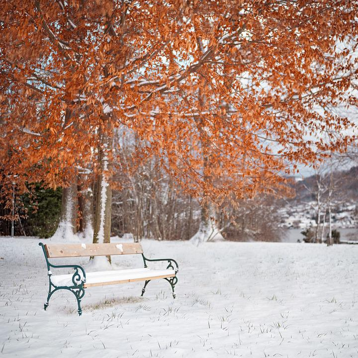 Wallpapers Wolf Hd Snow Winter Season 183 Free Photo On Pixabay