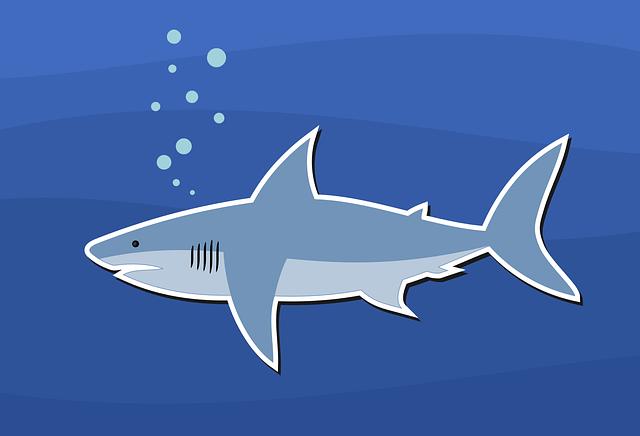 Download Wallpaper Aquarium 3d Shark Design Fish 183 Free Vector Graphic On Pixabay