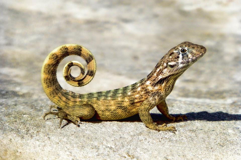 Green Animal Wallpaper Reptile Nature Animal 183 Free Photo On Pixabay