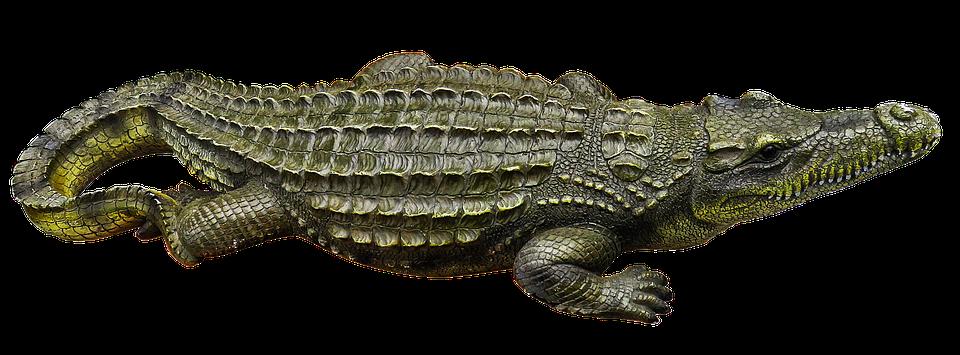 Animal Face Wallpaper Crocodile Metal Figure Art 183 Free Photo On Pixabay