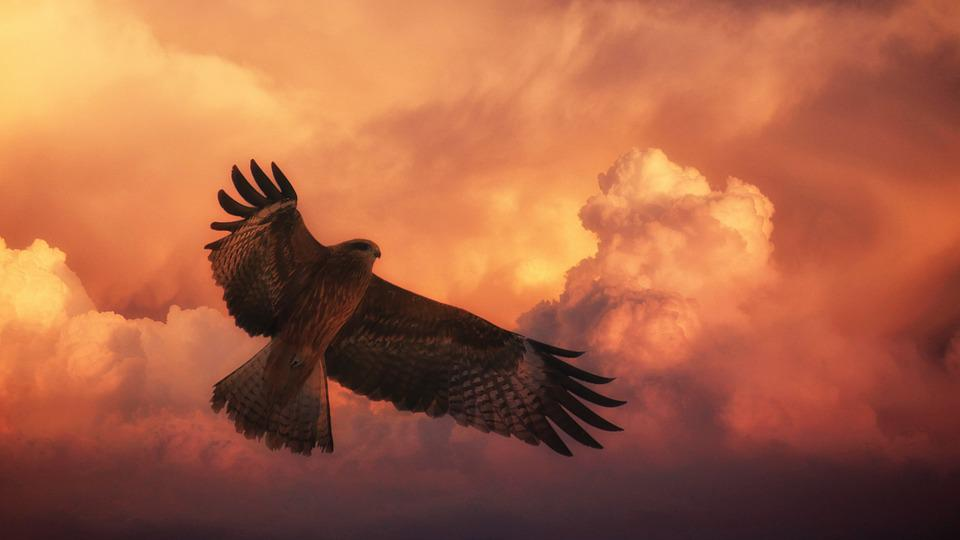 Hd Cool Girl Wallpaper Sunset Bird Big Hawk 183 Free Photo On Pixabay