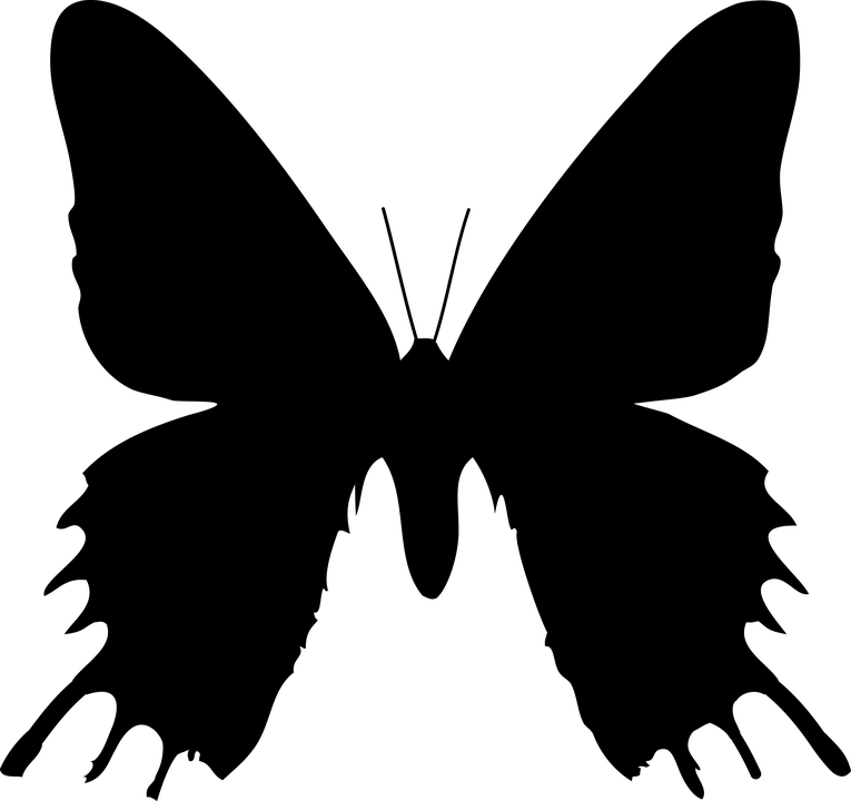 Girl Forest Wallpaper Butterfly Silhouette Nature 183 Free Image On Pixabay