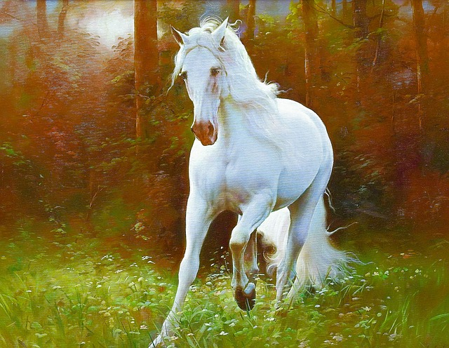Beautiful Girl Face Hd Wallpaper Horse White 183 Free Image On Pixabay