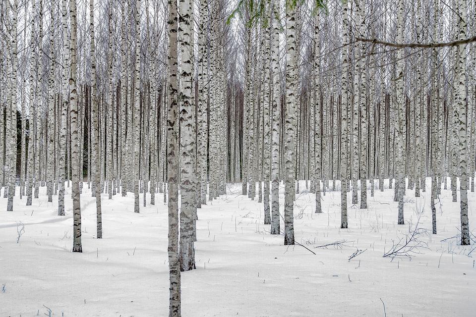 Forest Black And White Wallpaper 雪 冬 ツリー 183 Pixabayの無料写真