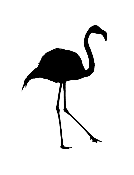 Wallpaper Black And White Girl Silhouette Flamingo Outline 183 Free Image On Pixabay