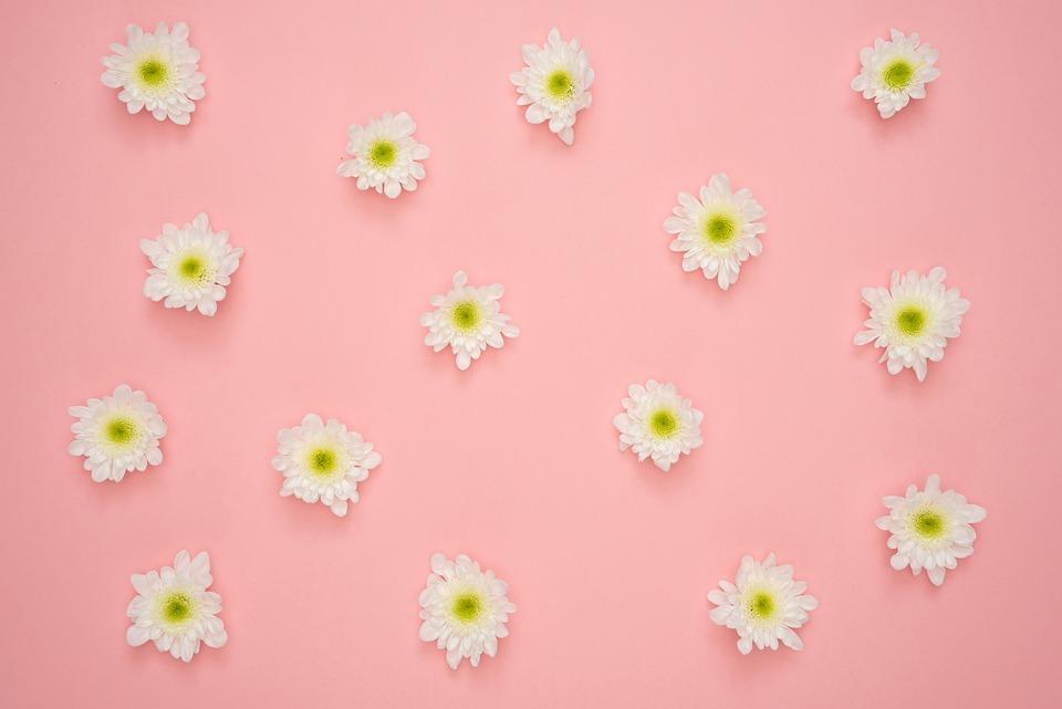 Flowers Yellow Pink Background - Free photo on Pixabay