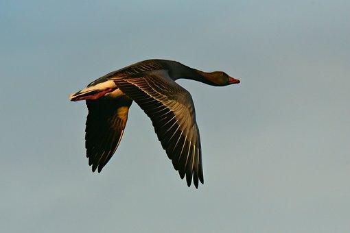 6,000+ Free Flying Bird  Bird Images - Pixabay