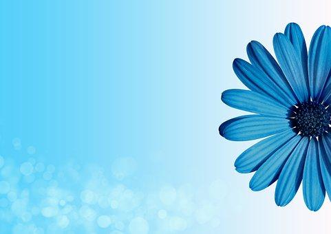 800+ Free Invitation Background  Invitation Images - Pixabay