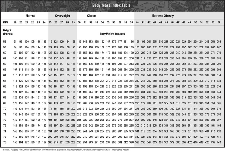 Height  Weight Chart Templates for Women Download Free  Premium - bmi chart template