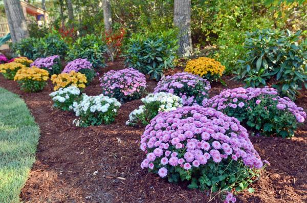 Flower Bed Tips For Spring Landscaping Design Tattoo