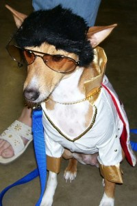 5 Pet costumes ideas - Page 4